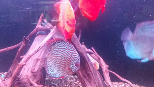 Altum Flora Discus, Green Base photo review