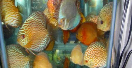 How to Reseal an Aquarium – Discus com