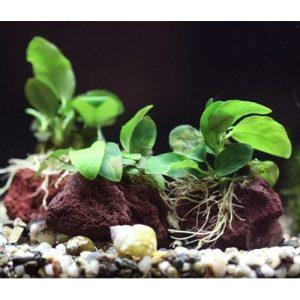 Planted Rocks
