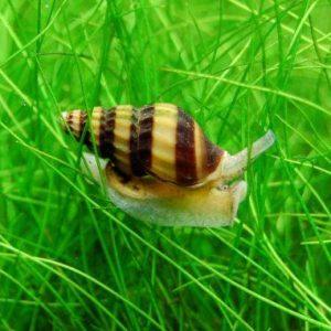 Snails & Crabs